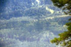 Déplacement massif de bombyx disparate Caterpillar descend de l'arbre sur le Web images libres de droits