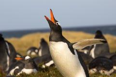 Déploiement de pingouin de Gentoo Photo stock