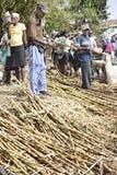 Dépouillement de l'écorce outre de Sugar Cane Photos libres de droits
