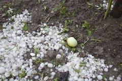 Désastre de tempête de grêle dans le jardin Images stock