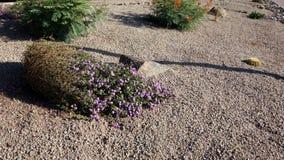 Désert aménageant en parc à Phoenix, AZ Photo stock