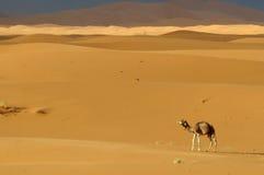 Désert au Maroc images stock