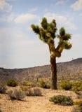 Désert avec le cactus, montagnes Images libres de droits