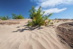 Désert avec le petit arbre Photographie stock libre de droits