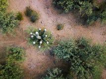 Désert avec les cactus et la photo d'antenne de buissons Photo stock