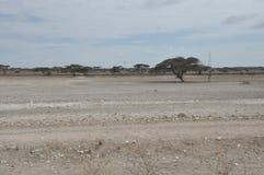Désert d'Afrique de l'Est photographie stock