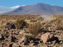 Désert d'Atacama Photographie stock