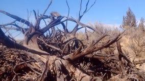 Désert de bois mort Photo stock