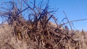 Désert de bois mort Photos libres de droits