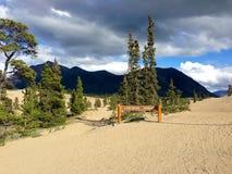Désert de Carcross, territoire de Yukon, Canada Photographie stock
