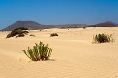 Désert de Corralejo à Fuerteventura Photographie stock libre de droits