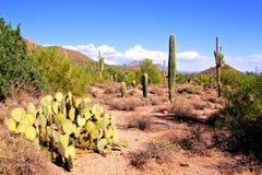 Désert de l'Arizona photos stock