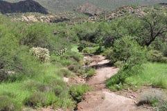 Désert de l'Arizona Photographie stock