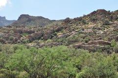 Désert de l'Arizona Photos libres de droits