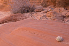 Désert de l'Arizona image libre de droits