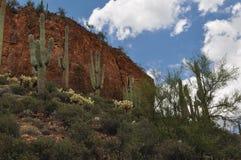 Désert de l'Arizona au monument national de Tonto Images libres de droits