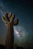 Désert de l'Arizona avec le cactus de Saguaro et la manière laiteuse Images stock