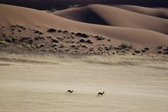 Désert de la Namibie photo stock