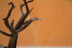 Désert de la Namibie Image libre de droits