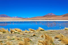 Désert de Laguna, Bolivie Image stock