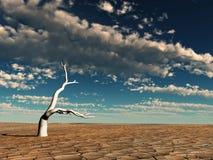 désert de matin images libres de droits
