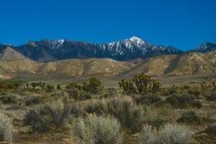 Désert de Mojave Image libre de droits