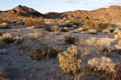 Désert de Mojave Images stock