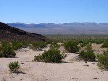 Désert de Mojave Photos stock