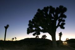 Désert de Mojave de Joshua Tree Big Rocks Yucca Brevifolia de montée de roche Image stock