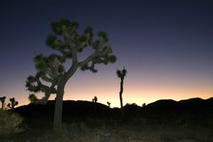 Désert de Mojave de Joshua Tree Big Rocks Yucca Brevifolia de montée de roche Photographie stock libre de droits