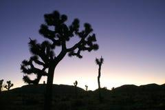 Désert de Mojave de Joshua Tree Big Rocks Yucca Brevifolia de montée de roche Image libre de droits