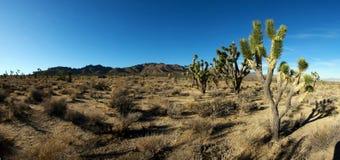 Désert de Mojave, la Californie Photographie stock