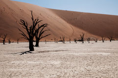 Désert de Namib Image libre de droits