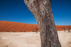 Désert de Namib Photographie stock