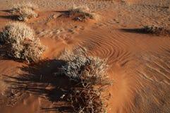 Désert de Namib Photos stock