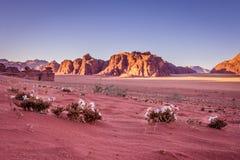 Désert de rhum de Wadi en Jordanie Image libre de droits