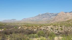 Désert de Saguaro Images stock