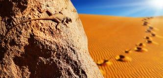 Désert de Sahara Image stock