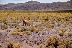 Désert de San Pedro de Atacama au Chili image libre de droits