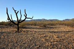 Désert de Sonoran Photographie stock