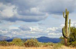 Désert de Sonoran Photos libres de droits