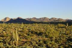 Désert de Sonoran photographie stock libre de droits