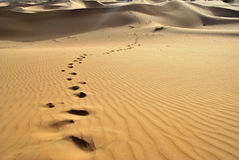 Désert-empreintes de pas de Thar Photo libre de droits