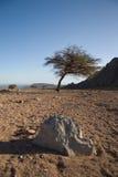 Désert et arbre secs photo stock