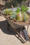 Désert Flora de brouette Images stock