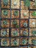 Désert fort aride patient de cactus Images libres de droits