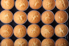 Désert frais de petit gâteau avant décoration Vue supérieure photo libre de droits
