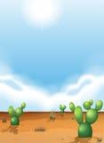 désert fuerteventura Espagne de cactus Images stock