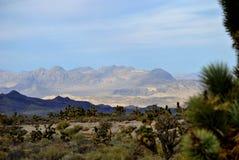 Désert méridional du Nevada Photographie stock libre de droits
