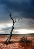Désert mort d'arbre
